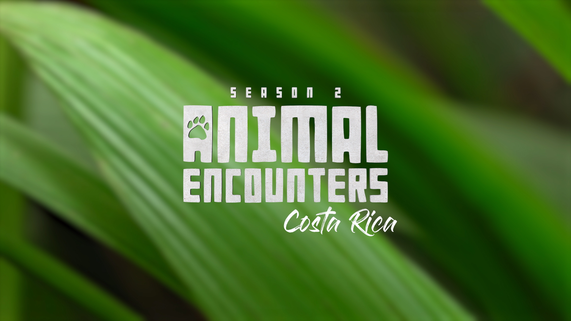 Animal Encounters Season 2 - Costa Rica