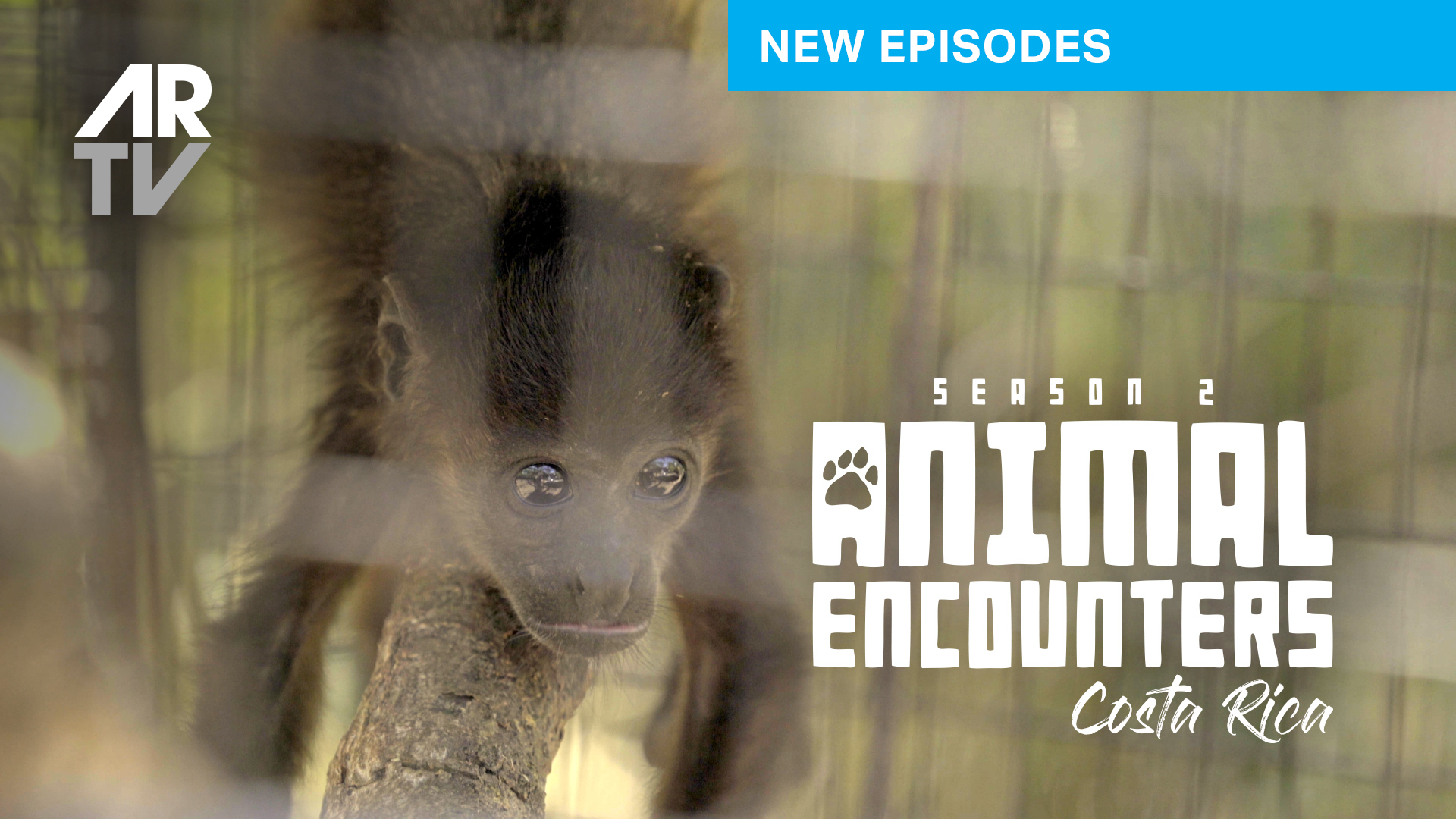 Episode 4 - ZooAve Animal Rescue